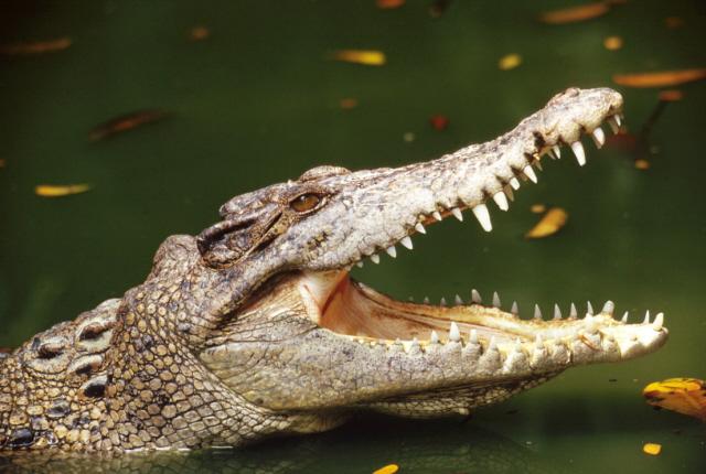 Блондинка хотела купить себе туфли из кожи крокодила. Но то, что она сделала дальше, насмешит каждого.