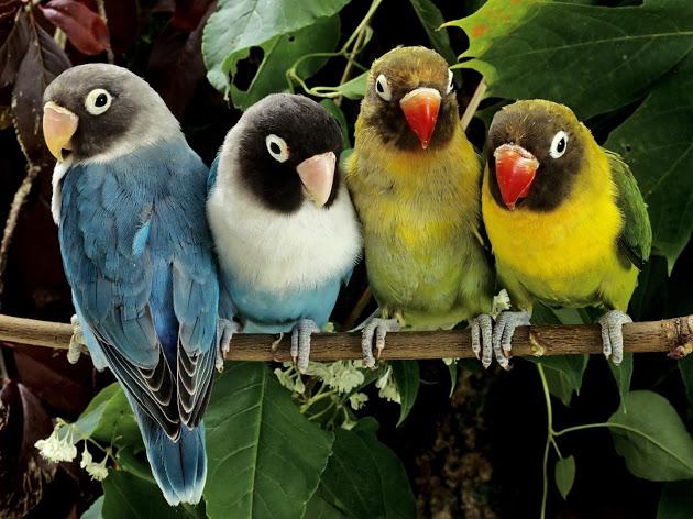 Женщина хотела воспитать своих попугаев. Но то, что произошло дальше, ужасно насмешило.