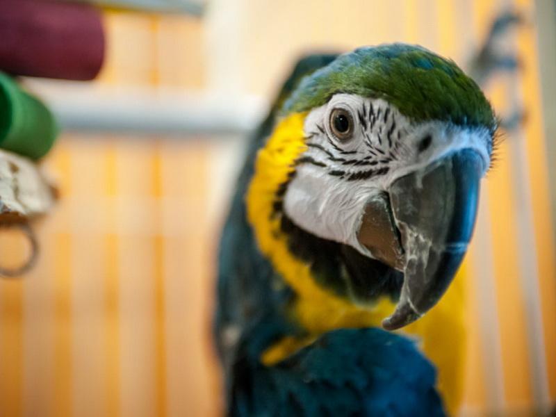 Она была в шоке, когда попугай назвал ее уродливой, и решила принять меры…