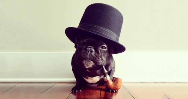 Он спросил менеджера отеля, можно ли остановиться с собакой. Ответ бесценен.