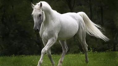 Он хотел купить лошадь, но владелец  твердил ему одно и тоже. Причина ошеломляет!