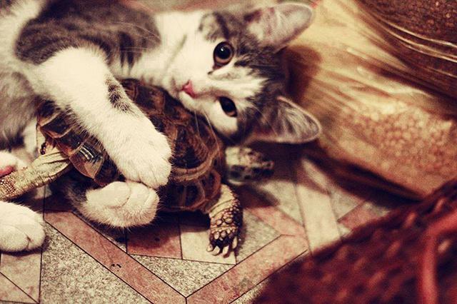 Кошка была в шаге от наказания, но ее план отступления удивил всех