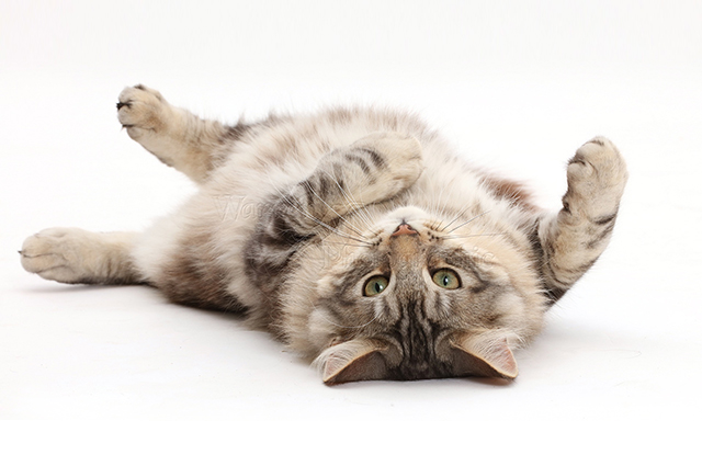 Удивительная история о невероятно смышленом коте с чувством собственного достоинства