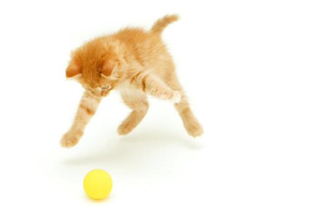 Кошка, мешающая спать ночью, поразила хозяев своим необычайным поступком