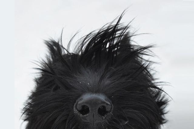 Смешнейшая история вызволения одной очень упрямой и злобной собаки