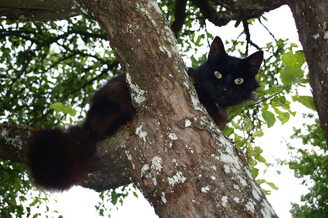 Вокруг котенка, застрявшего на дереве, разыгрался целый смешнейший спектакль