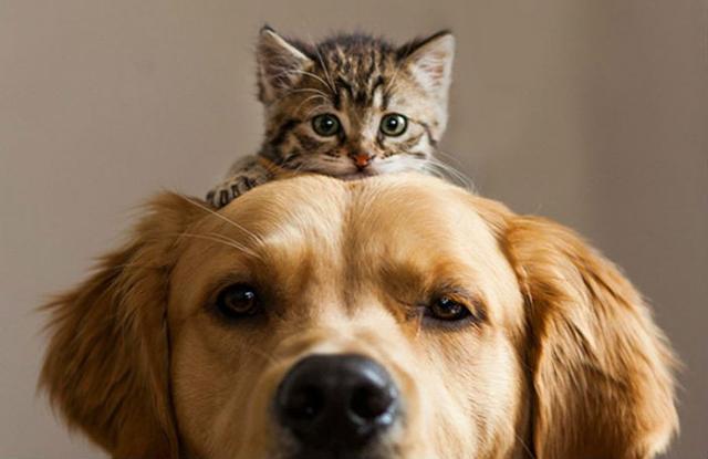 Парень отдал крошечного котенка на воспитание в мастерскую, и что из этого получилось
