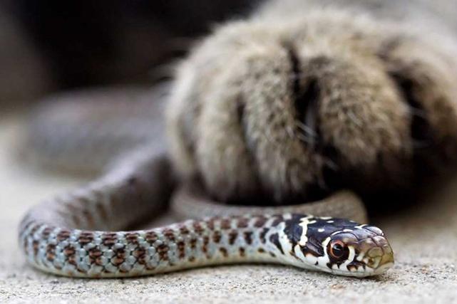Восхитительная история о кошке и рептилии, которые так и не подружились