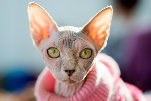 Эпичная история о коте и его незадачливом смотрителе, который чуть все не испортил