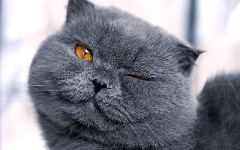Дневник собаки против дневника кошки. Это идеальный вариант!