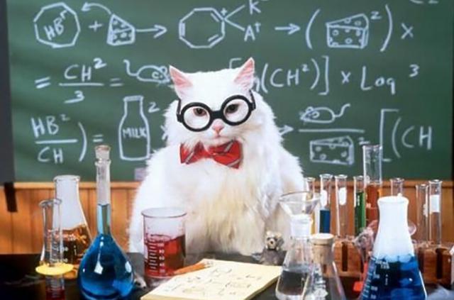 Смешнейшая история о разумном поведении животных в научной среде