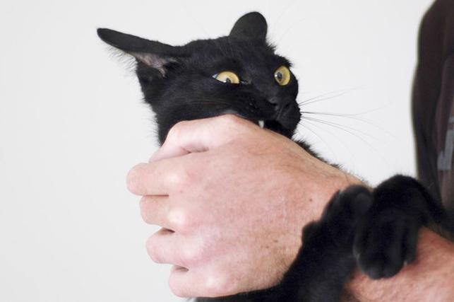 Кот устроил хозяину веселое утро, проделав потрясающий трюк