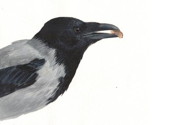 Эта смышленная ворона проявила недюженный интеллект и, кажется…
