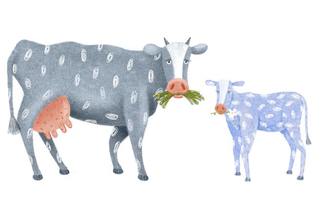 Корова никого не подпускала к новорожденному теленку, пока…