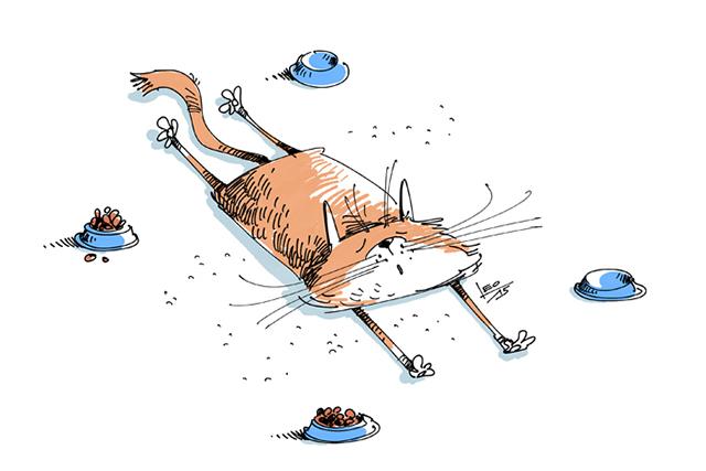 Эпичная развязка кошачьей драки довела хозяина до приступа взрывного смеха