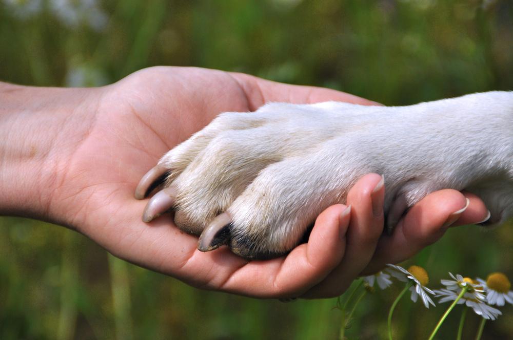 Женщина боролась, чтобы остаться в живых, но ее собака сделала поступок, который довел меня до слез!
