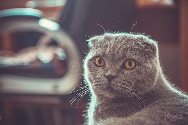 Когда он увидел, что происходит с котом, то не мог поверить своим глазам