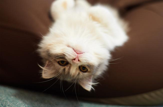 Этот кот нашел отличный способ поднять настроение своей хозяйке