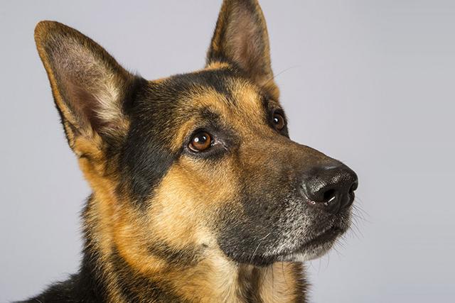 Удивительная история об очень умной собаке, поразившей всех своим поступком