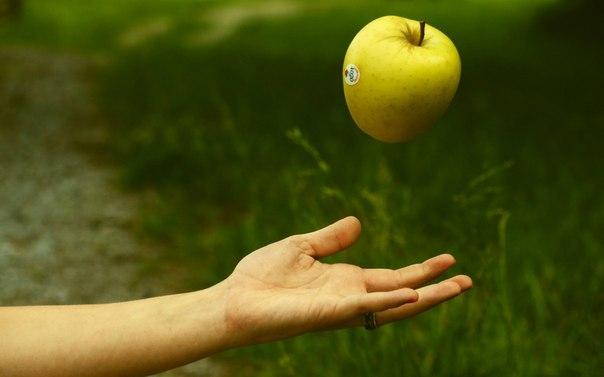 Притча о работе: падающее в руки яблоко, которое поражало всех