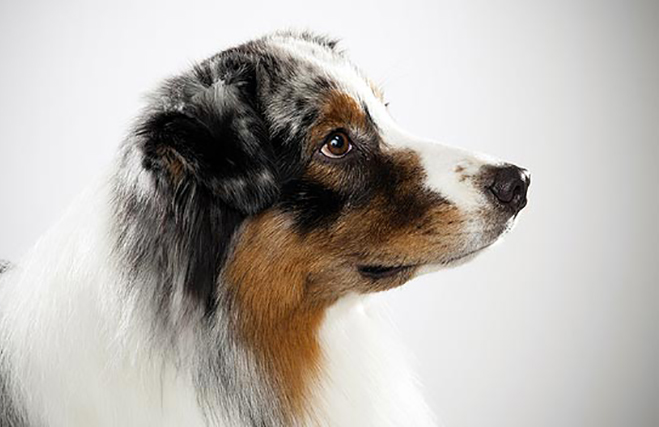 Потрясающе умная собака после этого случая стала настоящей звездой района