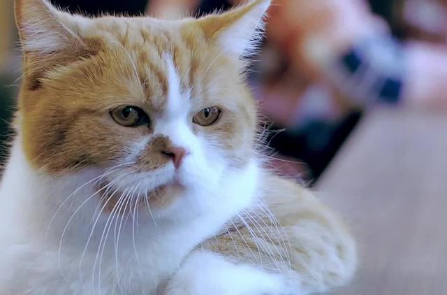 Невероятная обида этого кота не знала границ, он такого совсем не ожидал