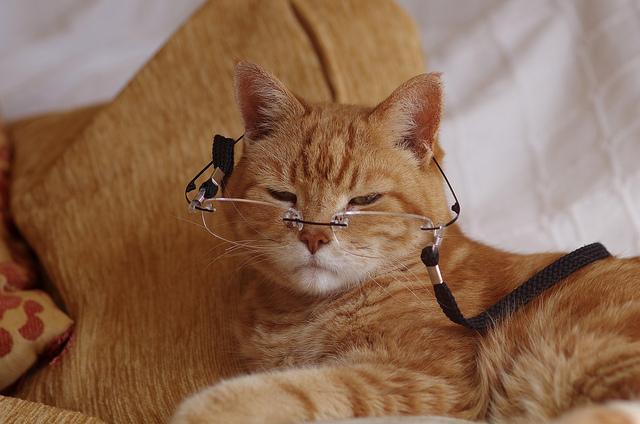 Застав дома совершеннейший дурдом, который устроил кот, она была в шоке