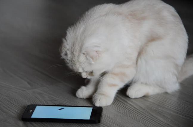 Поставив на телефон приложение для котов, он явно не расчитывал на такой результат