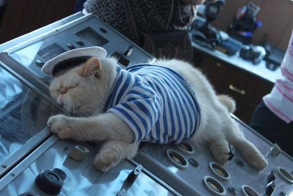 История этого везучего кота-моряка поражает своими поворотами