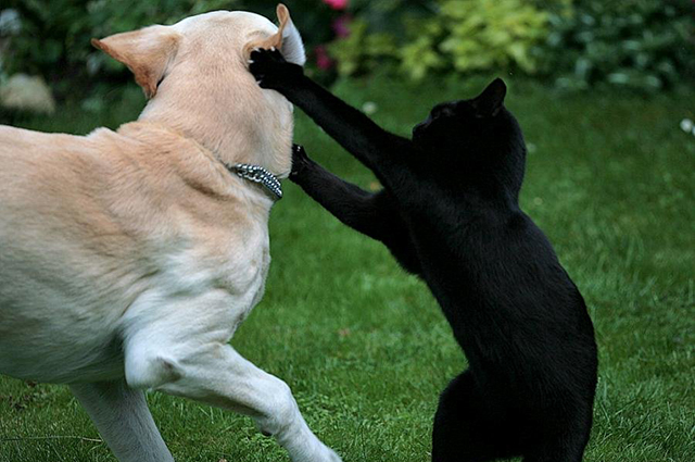 Когда она увидела, как кот защищает малыша от собаки, то не могла поверить своим глазам