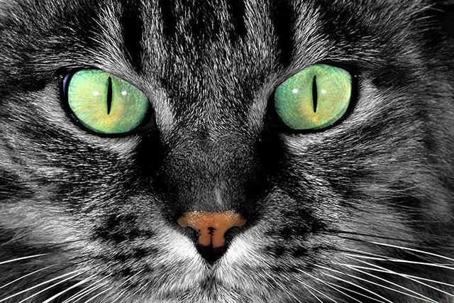 Увидев, что делает кошка, чтобы поймать моль, ее хозяин был в шоке