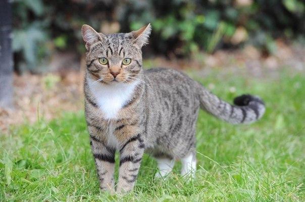 Отважный кот спасший своего маленького хозяина — настоящий герой