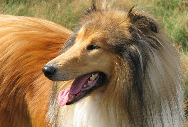 Взяв на воспитание брошенную собаку, он не ожидал, что она окажется настоящим гением