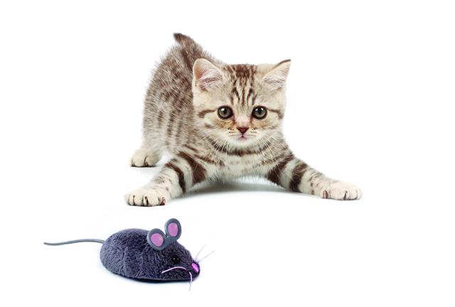 Когда она принесла домой эту игрушку, то ожидала от кота другой реакции