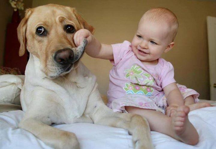 Она оставила своего ребенка с собакой из-за чрезвычайной ситуации. Но не ожидала увидеть это, когда вернулась домой!