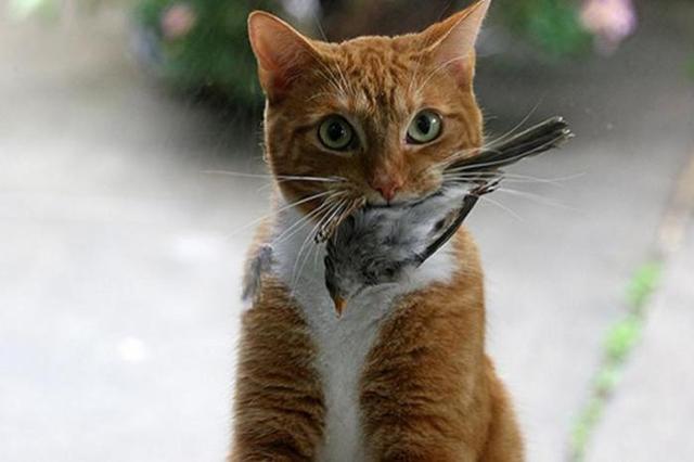 Воробьи и кот фото