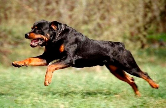То, что сделала эта собака, вырвавшись из-под присмотра хозяина, просто восхитительно
