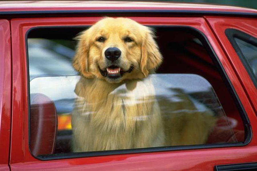 Он увидел умирающую собаку в закрытом автомобиле. То, что он сделал, чтобы спасти ее – гениально!