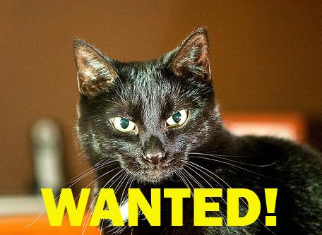 Увидев объявление про этого кота, она поразилась крику души хозяев