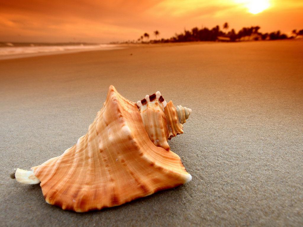 Мальчик подобрал ракушку во время прогулки на пляже. Но то, что он сказал, приложив ее к уху – бесценно!