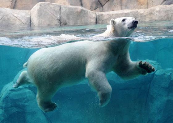 История странной, но милой дружбы между парнем и медведем не может не рассмешить