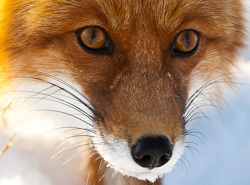 Животные дебатируют, кто отправится исследовать темный лес. Идея лиса — чистое золото!