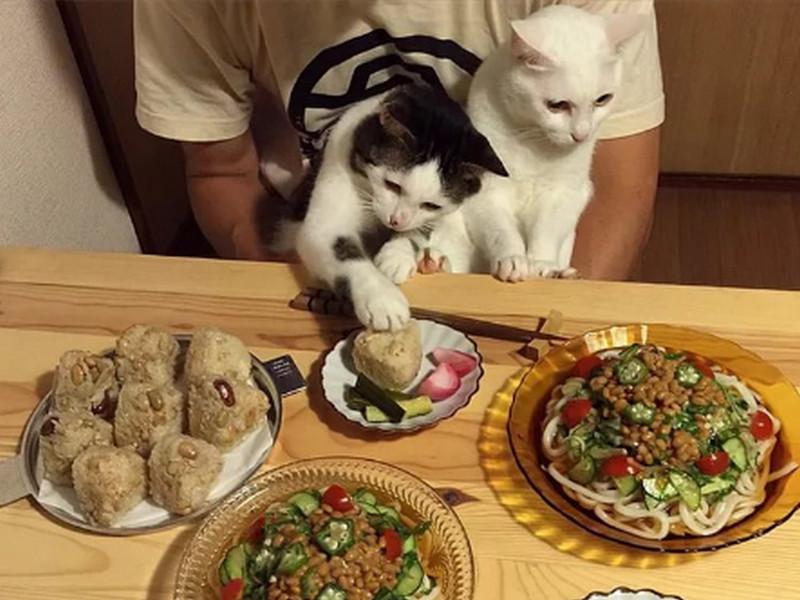 Он ужинал со своим котом, но не ожидал что все так закончится!