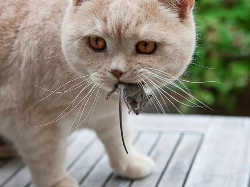 Наш кот совсем обленился и начал этим нервировать маму. Только послушай, что сделал кот в ответ!