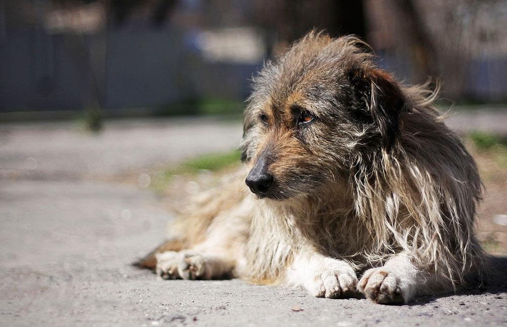 Этот мужчина просто пытался продать говорящую собаку за $10. Как он это аргументировал – бесценно!