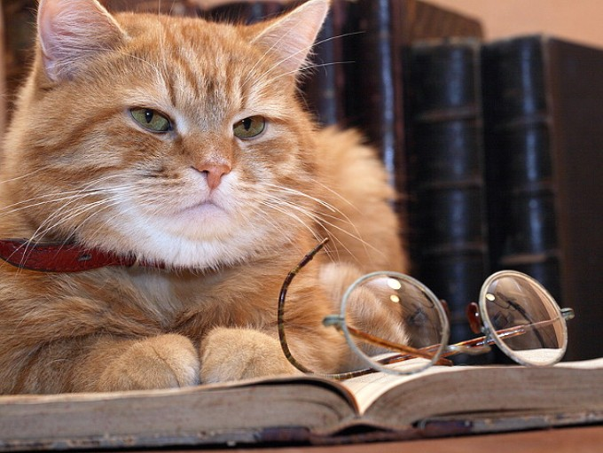 Эти четверо мужчин пытались определить, чей кот был самым умным. Но четвертый кот это фантастика!