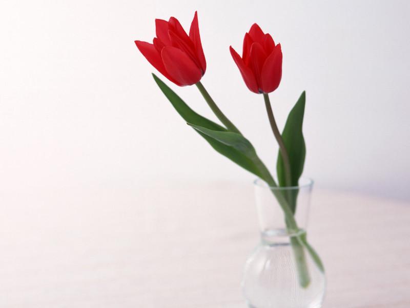 Муж и жена решили подарить тёте три цветка к подарку. То, что произошло дальше — стоит прочитать!