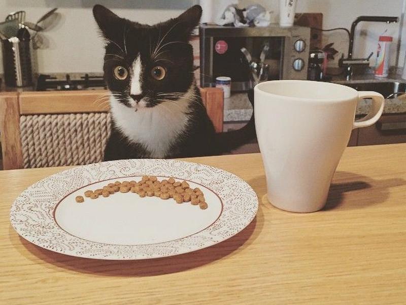 Хозяйка жаловалась, что её кот не разговаривает. И вот, когда он наконец-то заговорил…