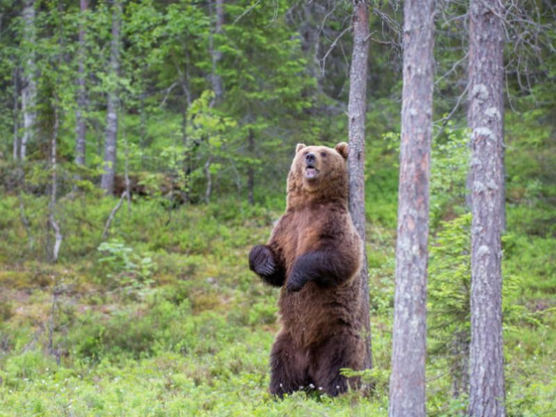 Мужик заблудился в лесу, навстречу ему медведь… Итог их встречи — это НЕЧТО!