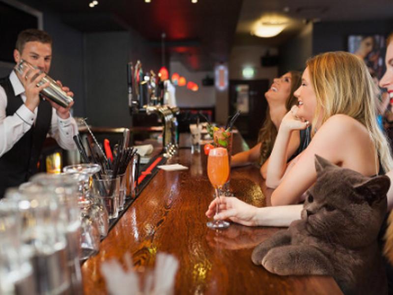 Приходит кот в бар попить пивка… Только послушай, что было дальше!